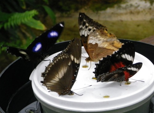 蝶のサンクチュアリ