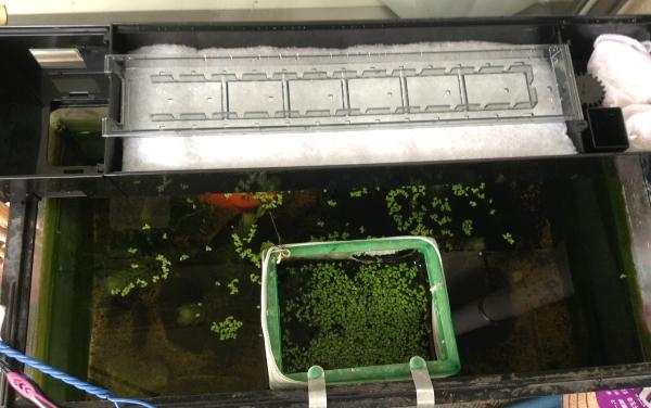 【GEX】 デュアルクリーン 600SP 60cm水槽用上部フィルター