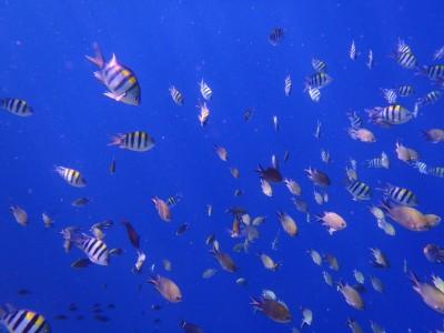 きれいな魚
